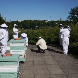 Oopperan mehiläiset_mehiläispesät